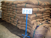 Stuffing in Warehouse CV. ARVIS SANADA coffee FTO from KSU Arinagata